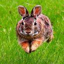 Bunny789