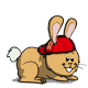 lapin/coach/lapin-orange.png